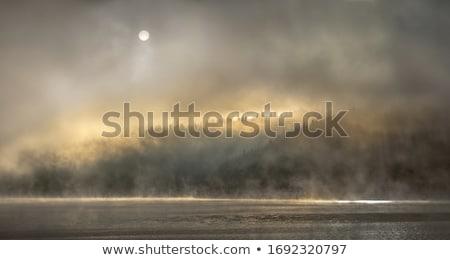 Gizlenmiş buğu yalnız ağaç puslu sabah Stok fotoğraf © eleaner