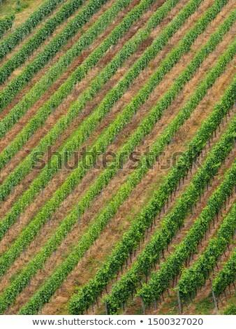 mezők · szőlőtőke · kilátás · háttér · mező · ipar - stock fotó © lightpoet
