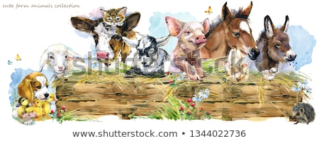 farm animals on the meadow cartoon illustration stock photo © izakowski