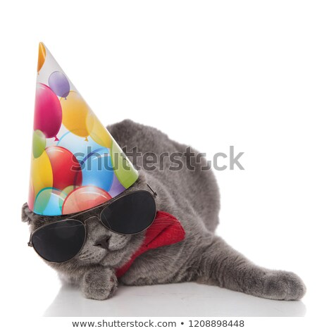 birthday scotish fold with sunglasses and red bowtie lying Stock photo © feedough