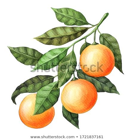 Friss mandarin narancsok levelek mintázott sötét Stock fotó © homydesign