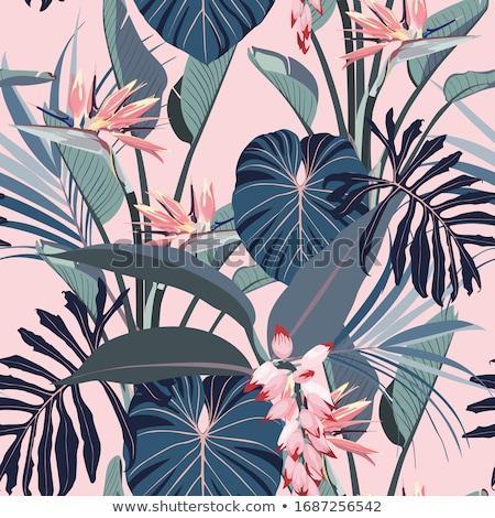 Rózsaszín szín illusztráció virág természet háttér Stock fotó © colematt