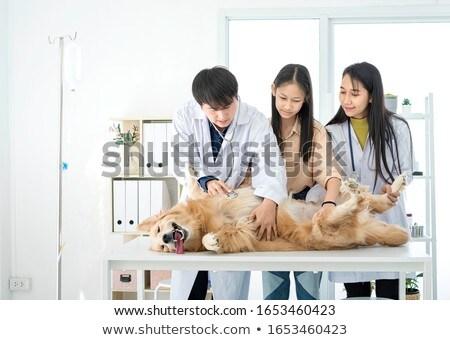 Lekarz weterynarii opieki ranny psa Zdjęcia stock © Kzenon