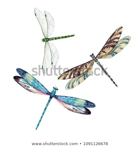 libélula · branco · raso · campo · foco - foto stock © posterize