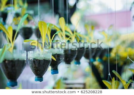 plântula · garrafa · mãos · primavera · natureza · folha - foto stock © devon