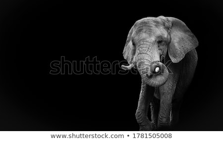 black marble elephant stock photo © compuinfoto