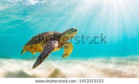 Kaplumbağa hayvanat bahçesi su doğa yürüyüş taş Stok fotoğraf © Ariusz