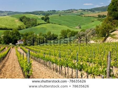 Wijngaard Italië najaar boom wijn Stockfoto © macsim