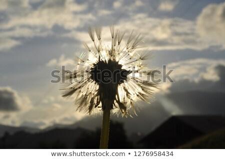 white flower on the sky background2 Stock photo © taden