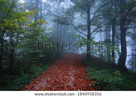 Yellow leaf fallen into mystical foggy forest Stock photo © Anterovium