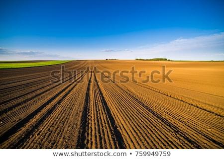 föld · mezőgazdasági · mező · tavasz · kész · vetés - stock fotó © fesus