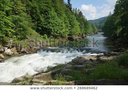 mountain river prut stock photo © oleksandro