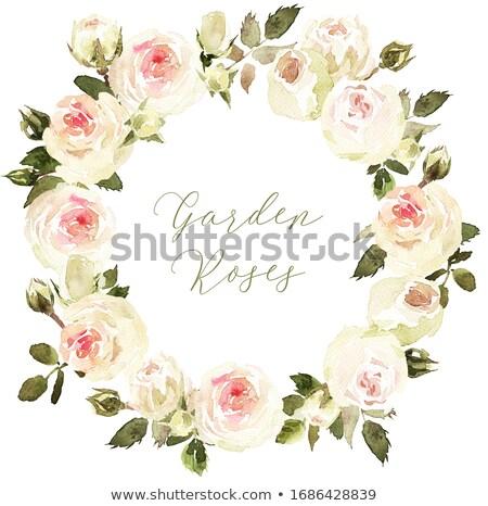 circle of pink roses Stock photo © blackmoon979