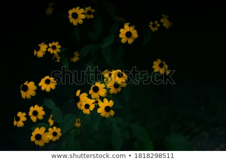 Flowerbed with yellow echinacea flowers Stock photo © manfredxy