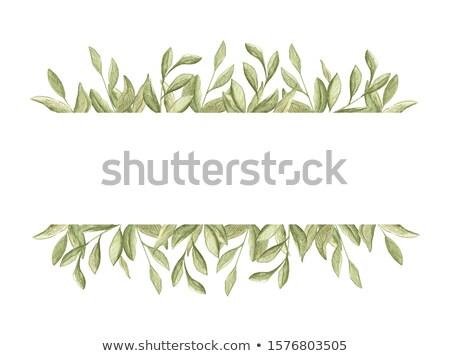 прямоугольный кадр зеленые листья завода Creative ручной работы Сток-фото © artjazz