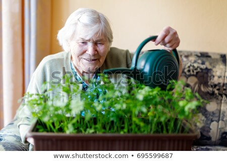 lady watering flowers Stock photo © photography33