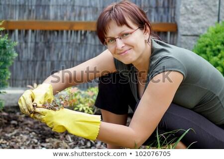 Middle Aged Female Florist Zdjęcia stock © Artush