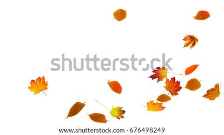 Foto stock: Outono · queda · isolado · branco · folha