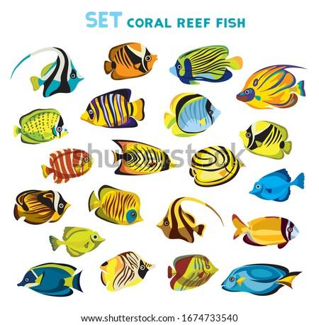 Marine life with tropical fishes, vector illustration Stock photo © carodi