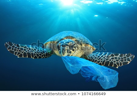 Stock photo: Green garbage can with plastic bag