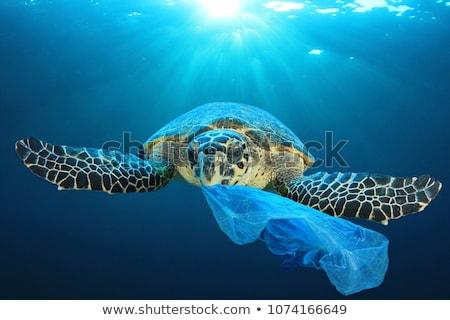 зеленый · мусорный · ящик · белый · пластиковых · закрыто · сумку - Сток-фото © stevanovicigor