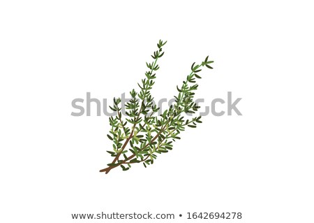 Thyme sprigs Stock photo © zia_shusha