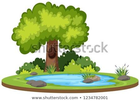 Bush vijver bomen rond water Stockfoto © rghenry