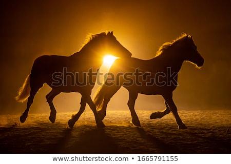 Stockfoto: Paard · silhouet · zonsondergang · illustratie · natuur · boerderij