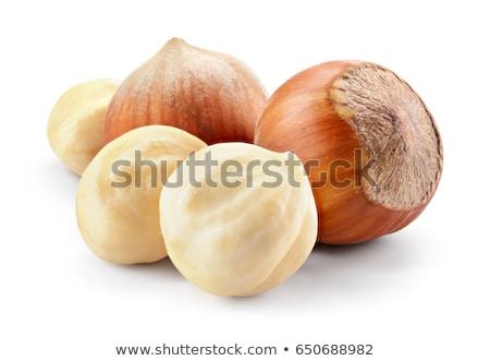 Hazelnoot geïsoleerd witte shell plantaardige zaad Stockfoto © jordanrusev