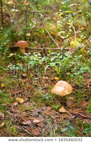 2 · 白 · 菌 · 草 · 新鮮な - ストックフォト © romvo