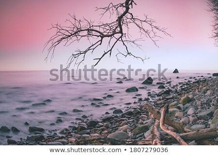 Alten toter Baum Strand romantischen Sonnenuntergang Kiesel Stock foto © meinzahn