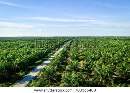 плантация пальмами природы фон деревья Сток-фото © Mikko
