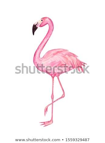ピンク 水彩画 塗料 結婚式招待状 デザイン デザインテンプレート ストックフォト © SArts