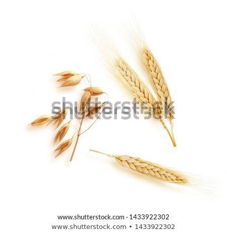 Gouden oren tarwe oogst voedsel gezondheid Stockfoto © stefanoventuri
