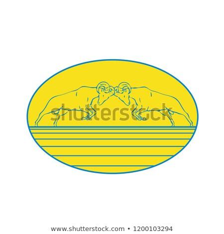Bighorn Sheep Ram Butting Heads Drawing Stock photo © patrimonio