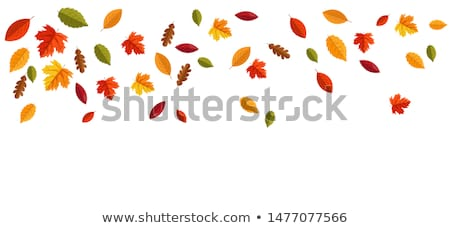 hello autumn autumn leaves background stock photo © lemony