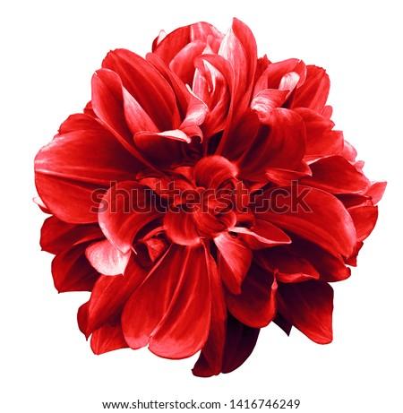 red flower isolated on white stock photo © vapi