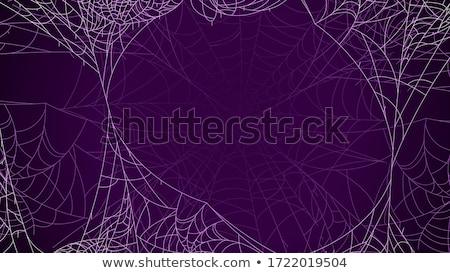 örümcek ağı şube güneş sonbahar örümcek Stok fotoğraf © sweetcrisis