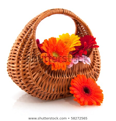 Basket picked Gerber flowers Stock photo © ivonnewierink