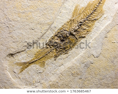 Peixe fóssil fundo oceano rocha pedra Foto stock © GekaSkr
