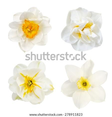 gelinler · beyaz · çiçekler · buket · düğün · gün · gül - stok fotoğraf © KMWPhotography