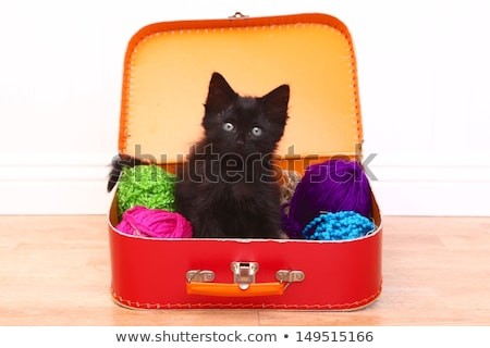 Adorable Kitten in a Case Filled with Yarn  Stock photo © tobkatrina