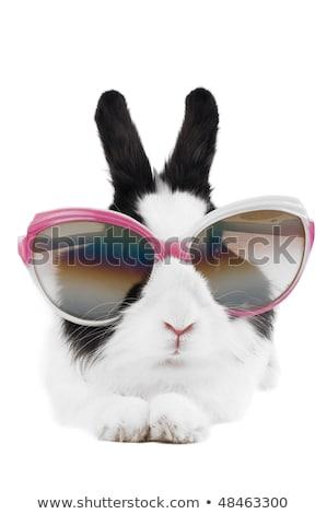 rabbit in Sunglasses isolated Stock photo © pxhidalgo