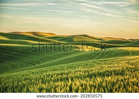 Vert jaune blé herbe fermes Washington Photo stock © billperry