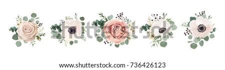 Flower Stock photo © dirkr