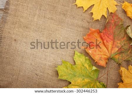 Düşmek renkli yaprakları çuval bezi kaba doğa Stok fotoğraf © olandsfokus