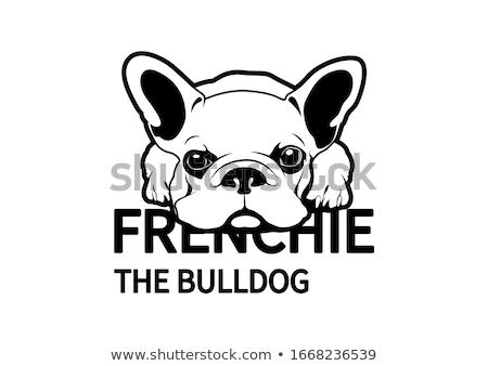 little french bulldog  Stock photo © OleksandrO