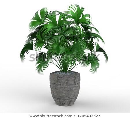 Stock photo: Green pot.