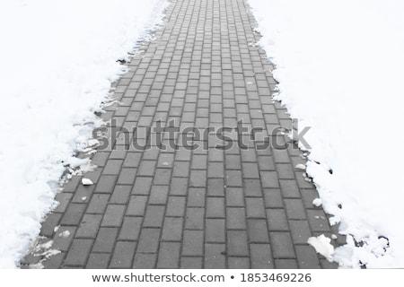 inverno · árvores · árvore · madeira · pôr · do · sol · paisagem - foto stock © alekleks
