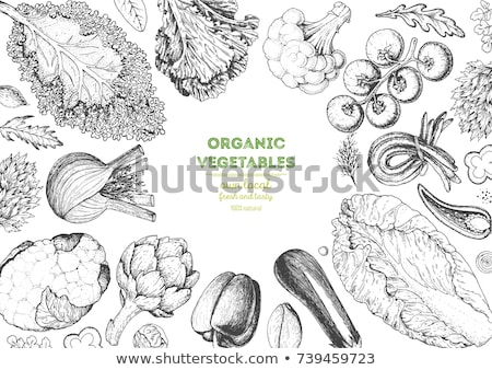 Eggplants in vintage style. Line art vector illustration Stock photo © ConceptCafe